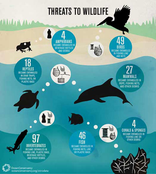 ocean trash killing wildlife: fish, mammals, birds, reptiles, invertebrates, amphibians, corals & sponges