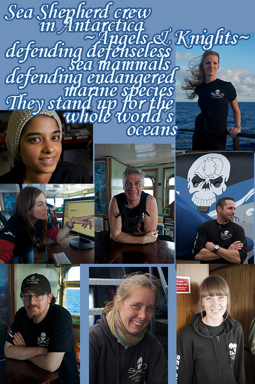 Sea Shepherd crew in Antarctica