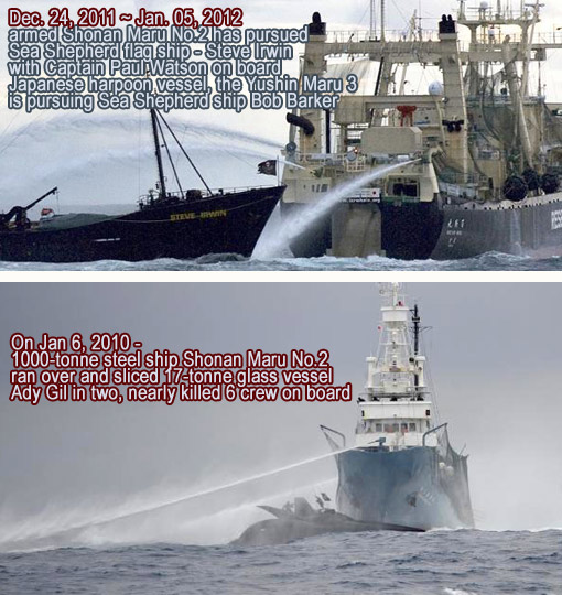 Top: the Steve Irwin in action against Japanese whaling boat Nisshin Maru; Bottom: Ady Gil is rammed and run over by Shonan Maru No. 2.