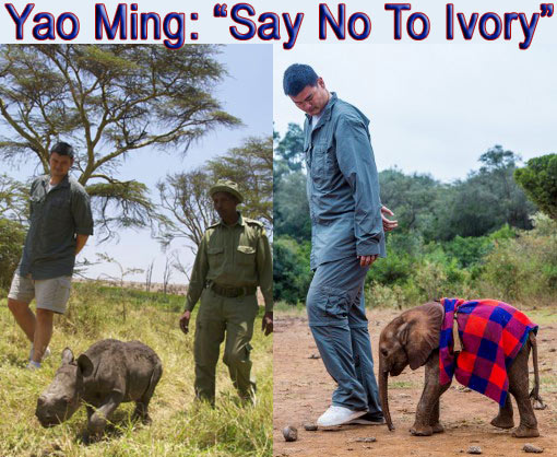Yao Ming: 'Say No to Ivory'