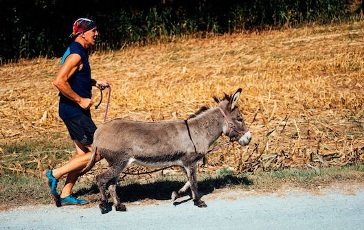 """Author of book """"Born to Run"""" races with donkeys: """"movement-as-medicine is a biological truth"""""""