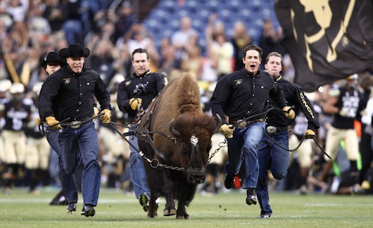 "University of Colorado football team's 1,200-pound buffalo mascot, Ralphie V, forced to retire for being ""too fast"""