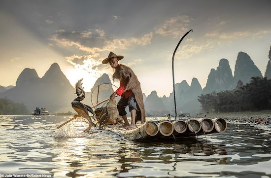 Guilin, China: fisherman partnering with cormorants to catch fish in ancient tradition dating back to 960 AD