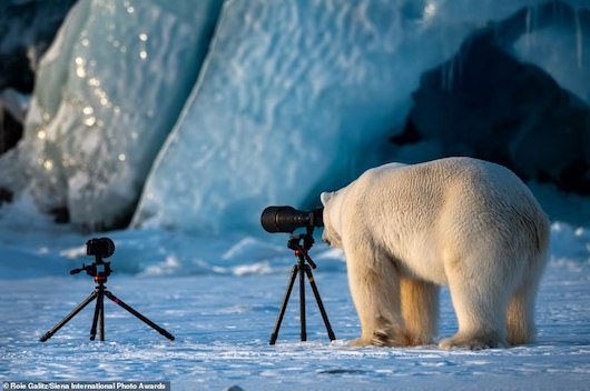 Siena International Photo Awards 2019 Winners: polar bear photographer, snail greets lizard, mantis vs. butterfly, whale shark beneath
